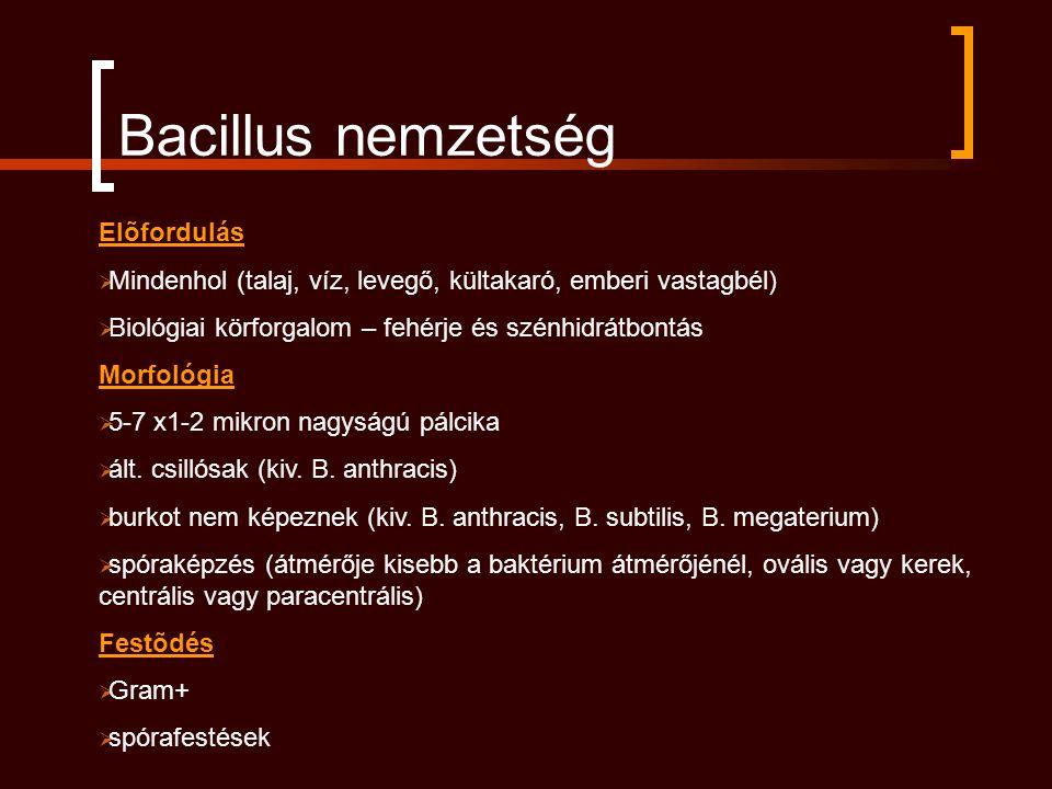 Bacillus nemzetség Elõfordulás  Mindenhol (talaj, víz, levegő, kültakaró, emberi vastagbél)  Biológiai körforgalom – fehérje és szénhidrátbontás Morfológia  5-7 x1-2 mikron nagyságú pálcika  ált.