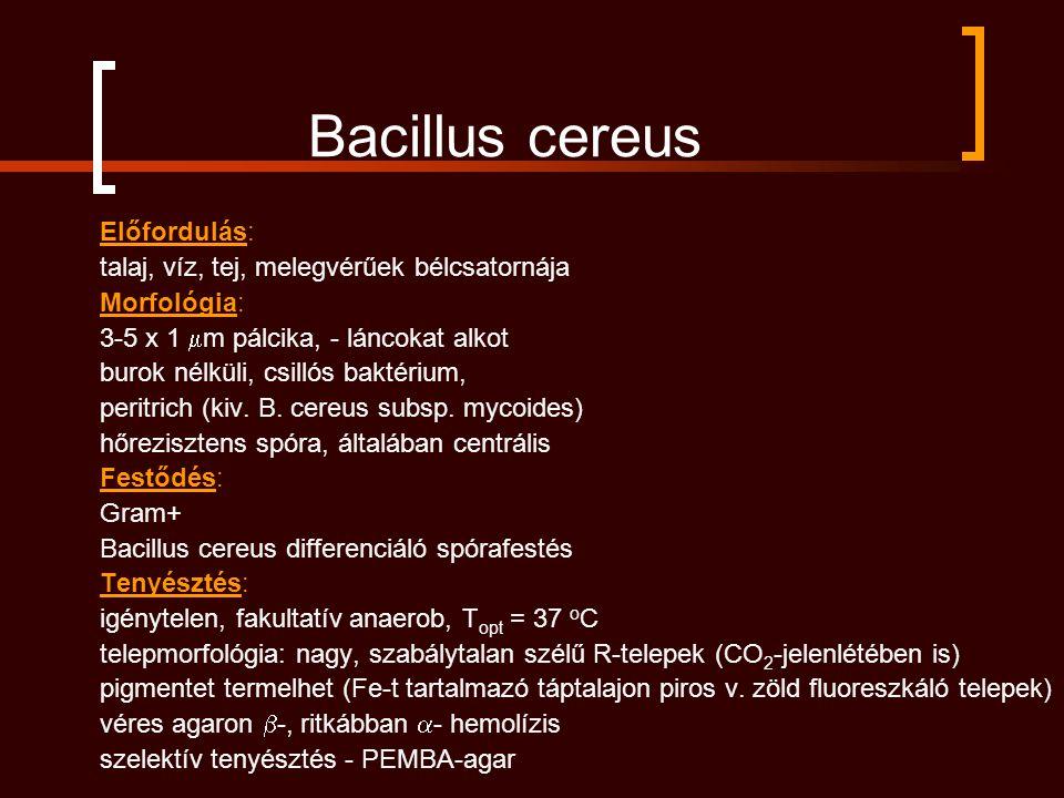 Bacillus cereus Előfordulás: talaj, víz, tej, melegvérűek bélcsatornája Morfológia: 3-5 x 1  m pálcika, - láncokat alkot burok nélküli, csillós baktérium, peritrich (kiv.