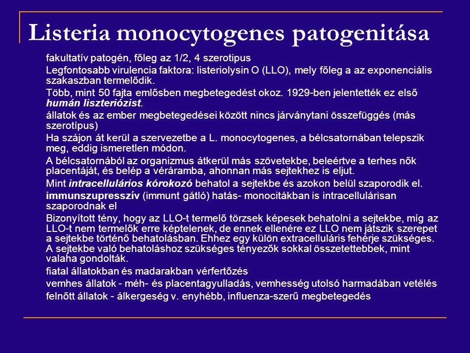 Escherichia coli Biokémia: - K-vitamin- és a B-vitamin-termelés -  -hemolizin és enterotoxin (enteropatogén törzsek) Antigénszerkezet: - O-antigének: típusspecifikus poliszacharidok - K-antigének: savanyú poliszacharidok, megakadályozzák az élő baktériumok agglutinációját homológ O-immunsavóban - H-antigének: fehérje természetűek, ez alapján szerotípusok - F-antigének: fehérje, adhéziós feladatot látnak el Ellenállóképesség: - csekély - rövid generációs idejük révén lehetőségük van rezisztenciát hordozó plazmidok átadására  infektív rezisztencia