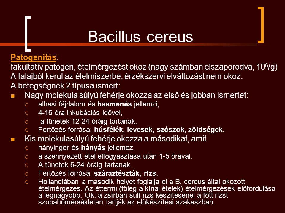 Bacillus cereus Patogenitás: fakultatív patogén, ételmérgezést okoz (nagy számban elszaporodva, 10 6 /g) A talajból kerül az élelmiszerbe, érzékszervi elváltozást nem okoz.