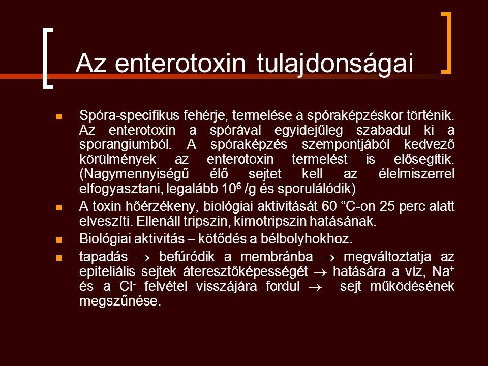 Az enterotoxin tulajdonságai Spóra-specifikus fehérje, termelése a spóraképzéskor történik. Az enterotoxin a spórával egyidejűleg szabadul ki a sporan