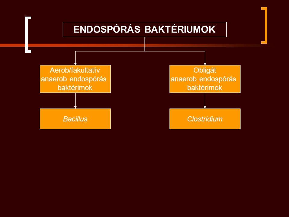 Clostridium perfringens exotoxinjai Cl.