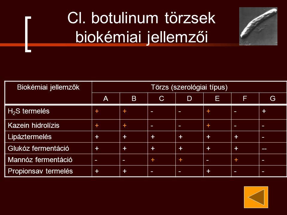 H 2 S termelés++--+-+ Kazein hidrolízis++--+-- Lipáztermelés++++++- Glukóz fermentáció++++++-- Mannóz fermentáció--++-+- Propionsav termelés++--+-- Biokémiai jellemzőkTörzs (szerológiai típus) ABCDEFG Cl.