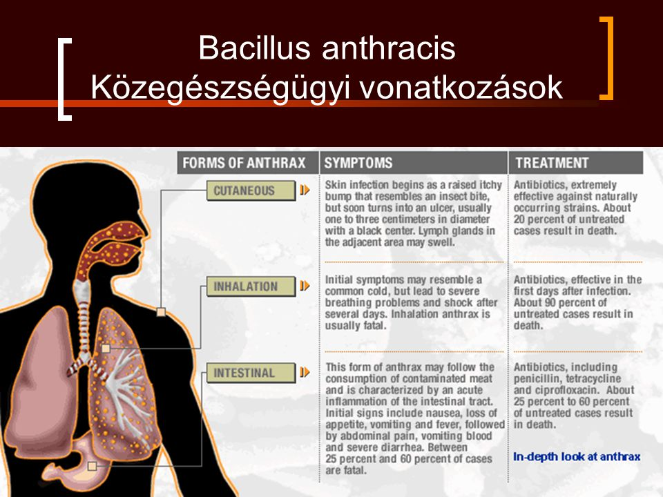 Bacillus anthracis Közegészségügyi vonatkozások