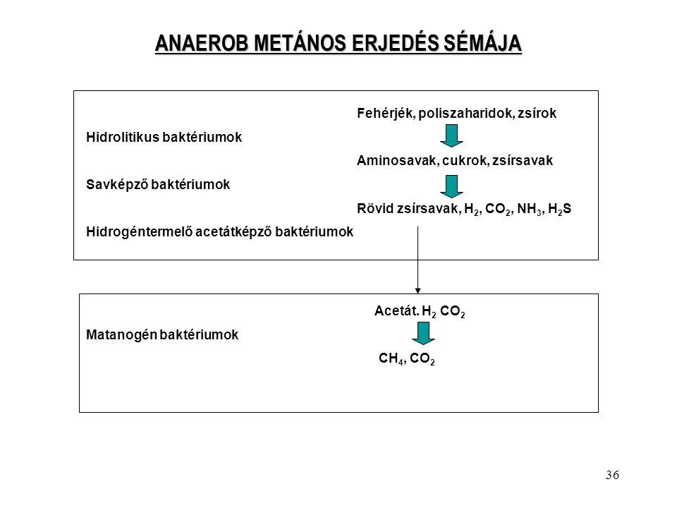 36 ANAEROB METÁNOS ERJEDÉS SÉMÁJA Fehérjék, poliszaharidok, zsírok Hidrolitikus baktériumok Aminosavak, cukrok, zsírsavak Savképző baktériumok Rövid z