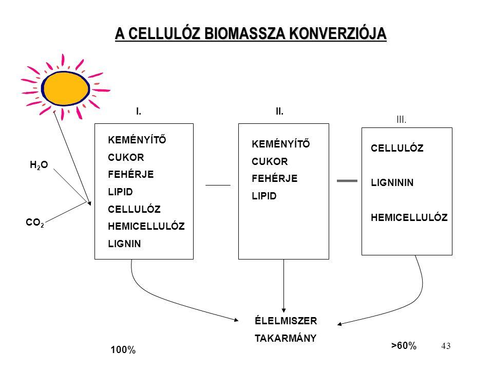 43 A CELLULÓZ BIOMASSZA KONVERZIÓJA KEMÉNYÍTŐ CUKOR FEHÉRJE LIPID CELLULÓZ HEMICELLULÓZ LIGNIN KEMÉNYÍTŐ CUKOR FEHÉRJE LIPID CELLULÓZ LIGNININ HEMICEL