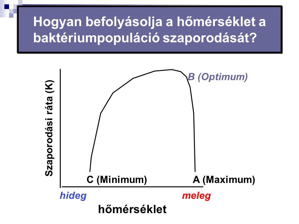 Hogyan befolyásolja a hőmérséklet a baktériumpopuláció szaporodását? hőmérséklet meleghideg C (Minimum) B (Optimum) A (Maximum) Szaporodási ráta (K)