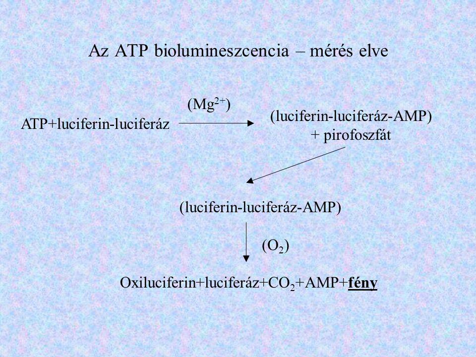 Az ATP biolumineszcencia – mérés elve ATP+luciferin-luciferáz (Mg 2+ ) (luciferin-luciferáz-AMP) + pirofoszfát (luciferin-luciferáz-AMP) (O 2 ) Oxiluc