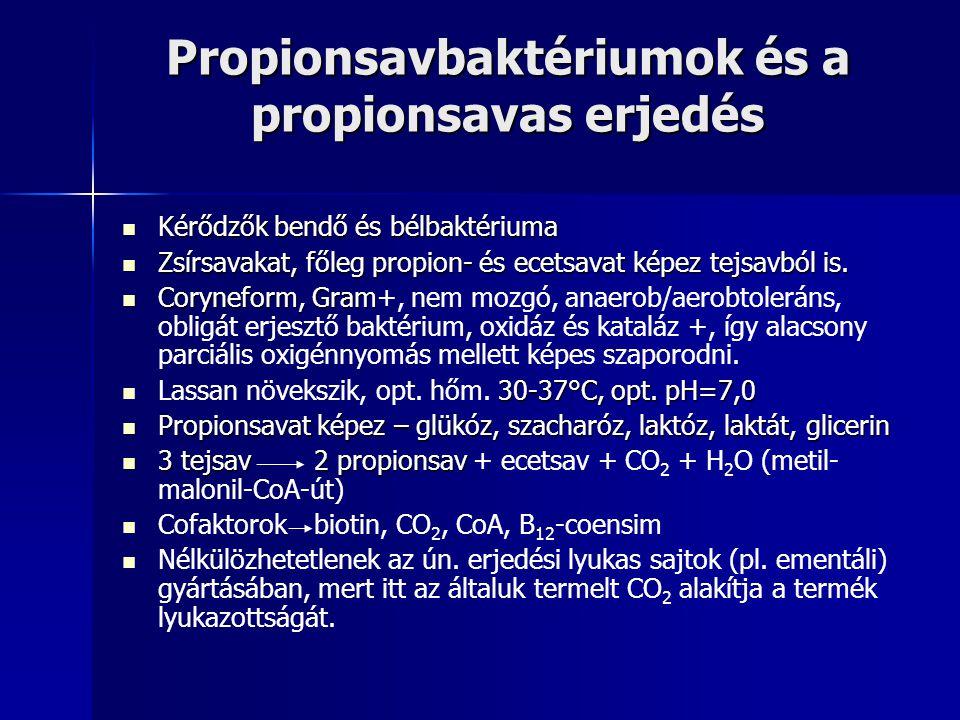 Propionsavbaktériumok és a propionsavas erjedés Kérődzők bendő és bélbaktériuma Kérődzők bendő és bélbaktériuma Zsírsavakat, főleg propion- és ecetsavat képez tejsavból is.