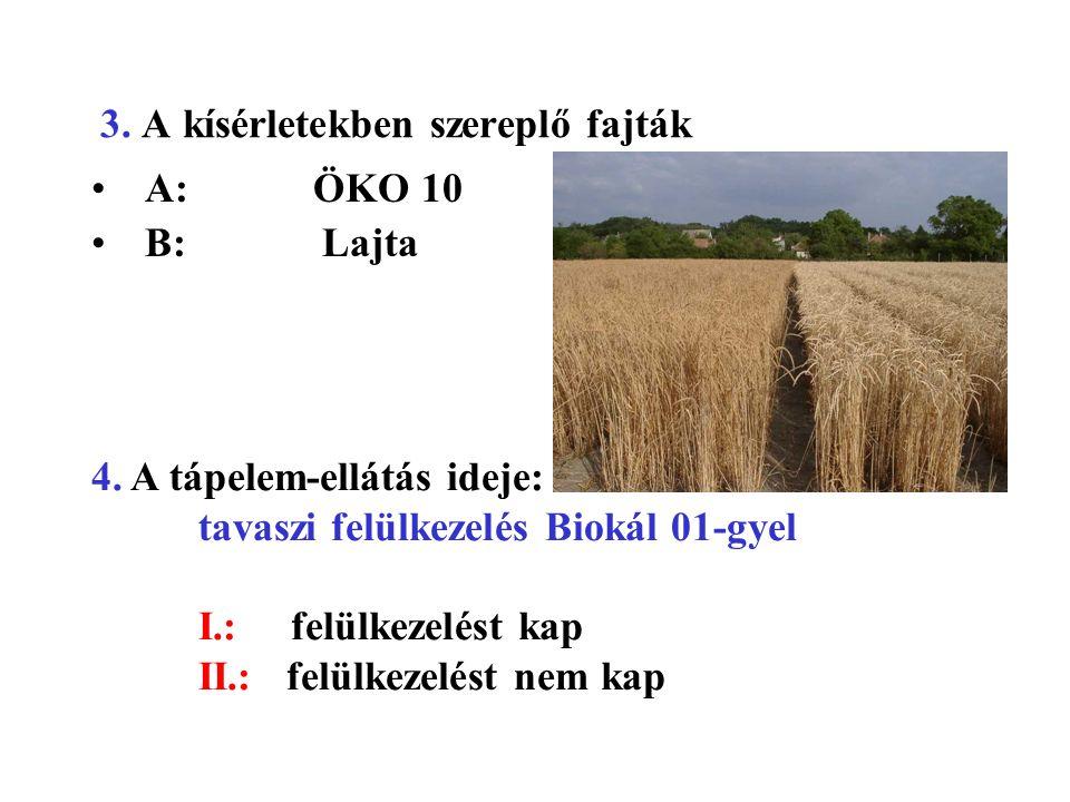 3. A kísérletekben szereplő fajták A: ÖKO 10 B: Lajta 4. A tápelem-ellátás ideje: tavaszi felülkezelés Biokál 01-gyel I.: felülkezelést kap II.: felül