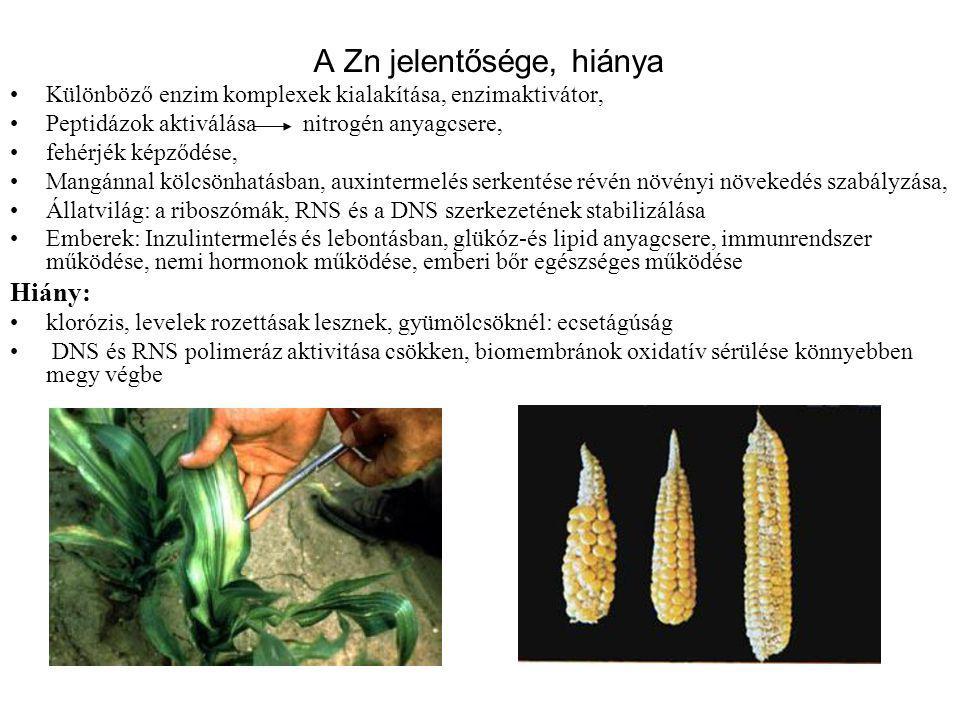 A Zn jelentősége, hiánya Különböző enzim komplexek kialakítása, enzimaktivátor, Peptidázok aktiválása nitrogén anyagcsere, fehérjék képződése, Mangánn