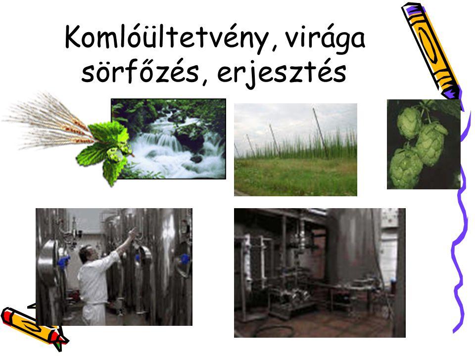 Komlóültetvény, virága sörfőzés, erjesztés
