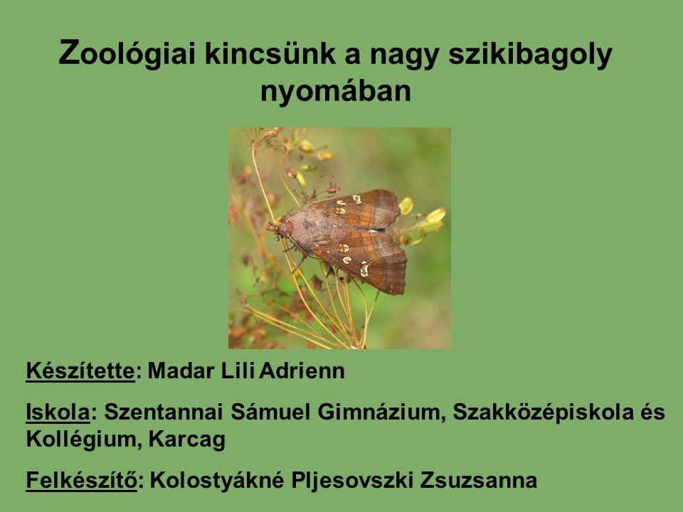 Z oológiai kincsünk a nagy szikibagoly nyomában Készítette: Madar Lili Adrienn Iskola: Szentannai Sámuel Gimnázium, Szakközépiskola és Kollégium, Karc