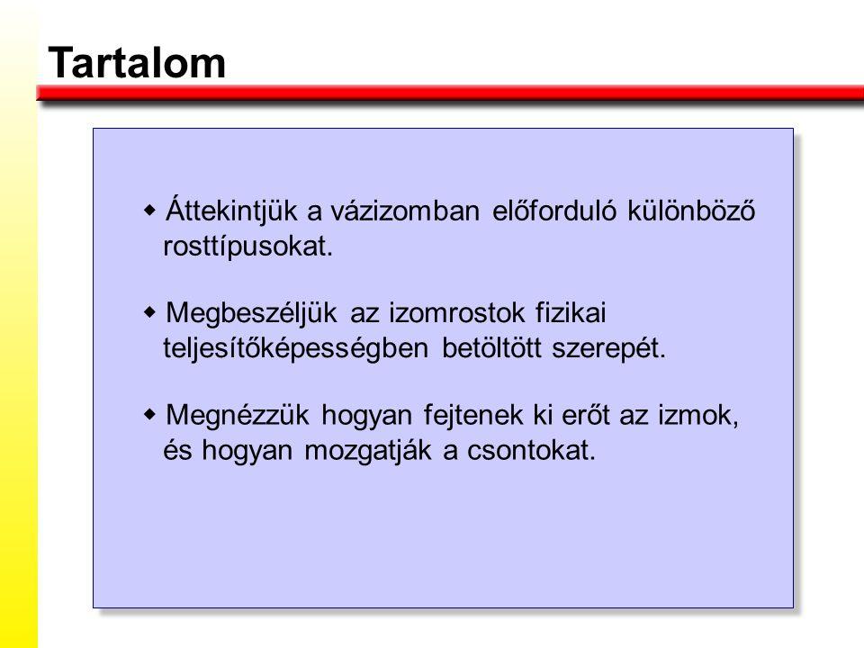 Az izomkontrakció típusai Izometriás kontrakció: az izom hossza nem változik, csak a feszülése.