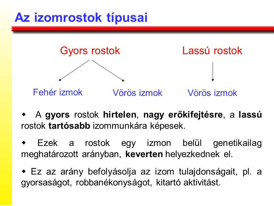  További energia az izomban tárolt glikogénből képződik anaerob glikolízis útján.