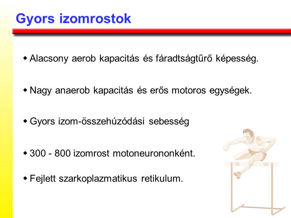 Az izomrostok típusai LassúGyors, vörösGyors, fehér
