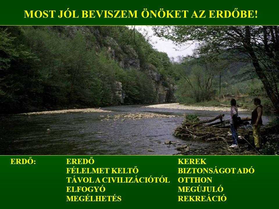 MEGTISZTELTEK A FIGYELMÜKKEL, KÖSZÖNÖM! www.dalerd.hu