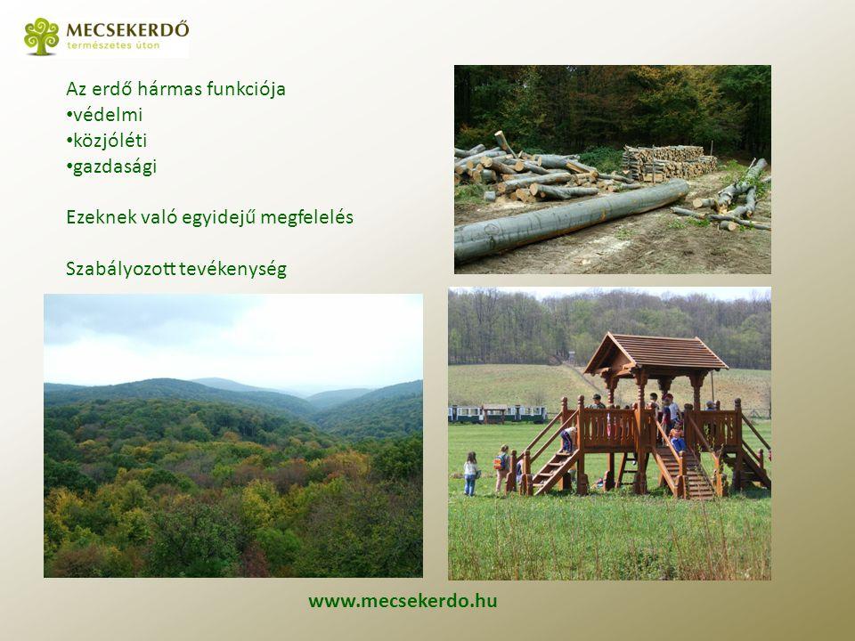 Az erdő hármas funkciója védelmi közjóléti gazdasági Ezeknek való egyidejű megfelelés Szabályozott tevékenység www.mecsekerdo.hu