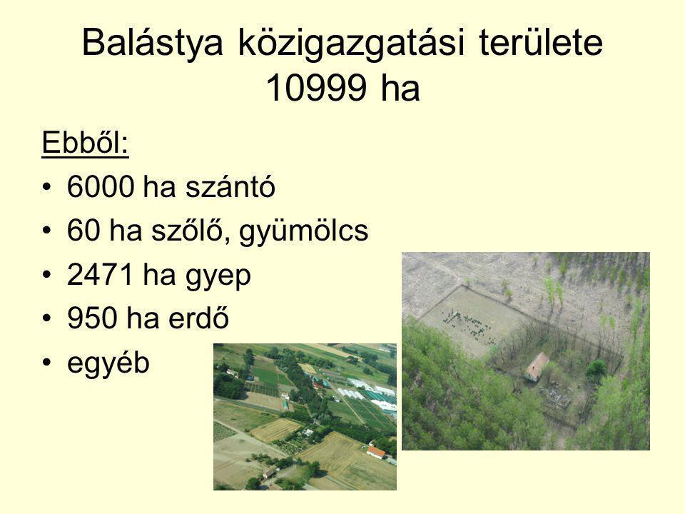 Balástya közigazgatási területe 10999 ha Ebből: 6000 ha szántó 60 ha szőlő, gyümölcs 2471 ha gyep 950 ha erdő egyéb