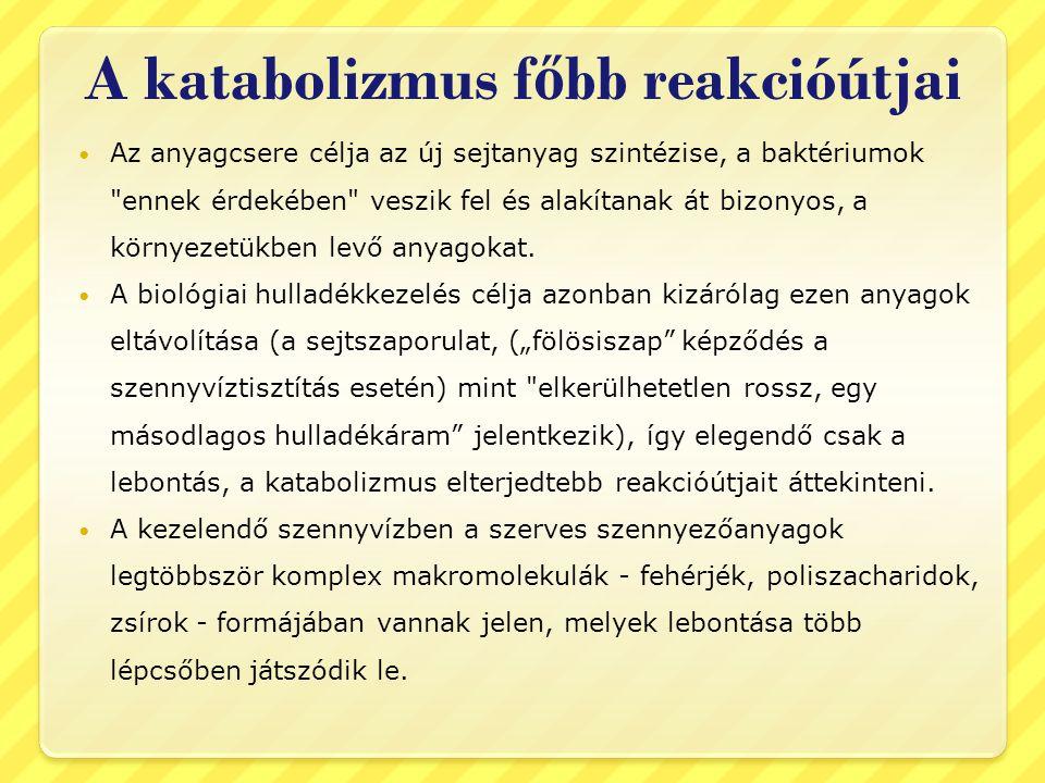 A katabolizmus f ő bb reakcióútjai Az anyagcsere célja az új sejtanyag szintézise, a baktériumok