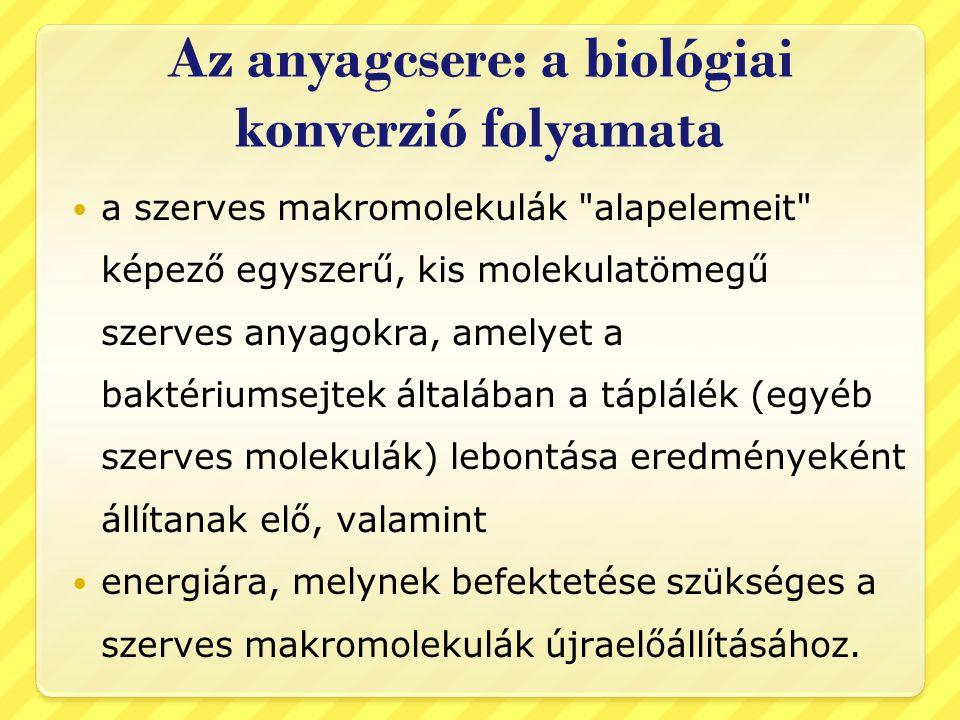 Az anyagcsere: a biológiai konverzió folyamata a szerves makromolekulák