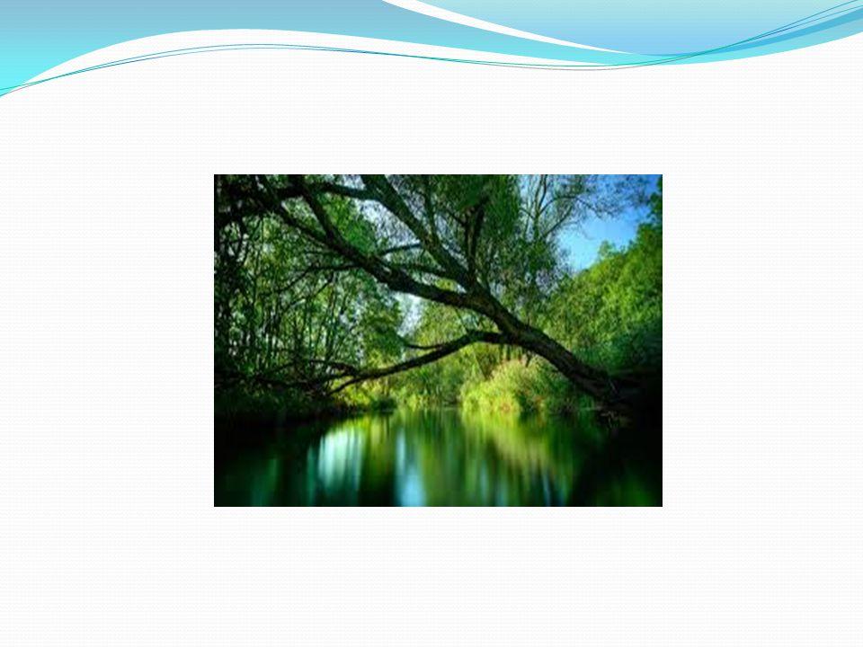 Természet Az EU három legfontosabb természetvédelmi törvénye az ún.