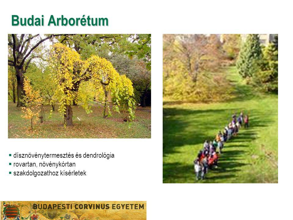 Budai Arborétum  dísznövénytermesztés és dendrológia  rovartan, növénykórtan  szakdolgozathoz kísérletek