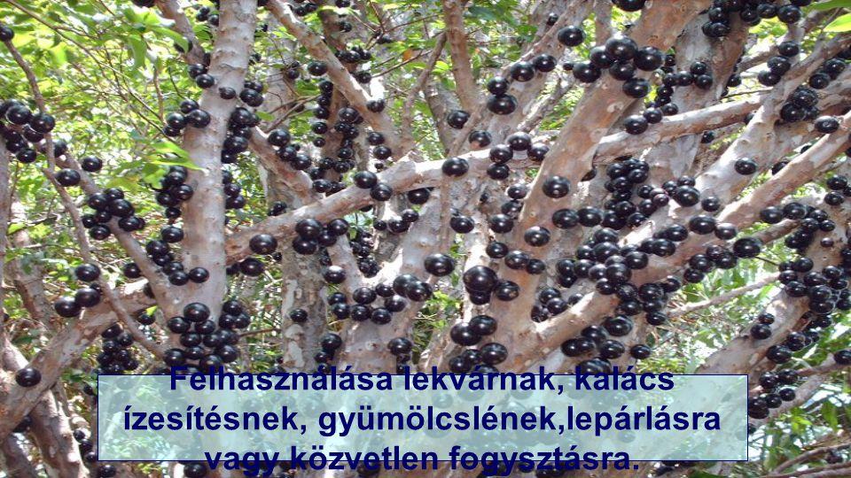 A friss gyümölcs a leszedést követő 3-4 nap után kezd erjedni.