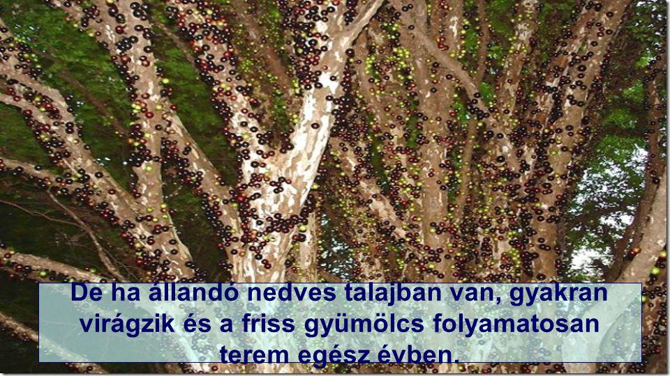 Alapjában a fa csak egyszer – kétszer virágzik évente,