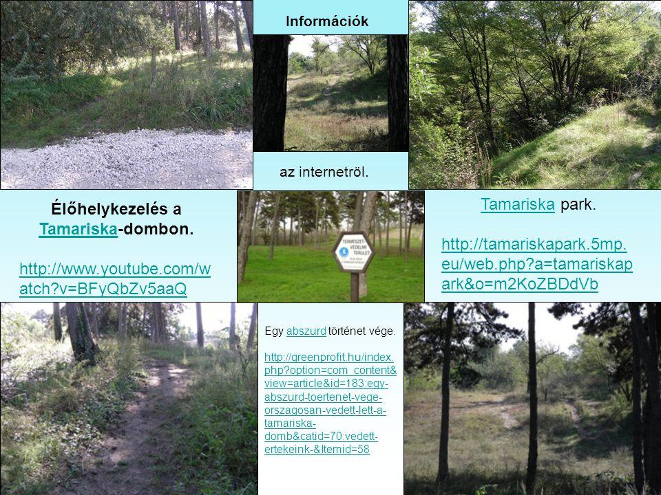 Csepel egy szép zöld területe. Ösvényekkel, pihenő helyekkel. Maga a terület nem túl nagy, de kis sétákra ideálisan alkalmas.