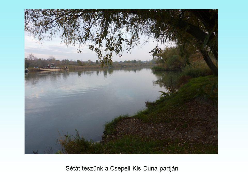 Élőhelykezelés a Tamariska-dombon. Tamariska http://www.youtube.com/w atch?v=BFyQbZv5aaQ TamariskaTamariska park. http://tamariskapark.5mp. eu/web.php