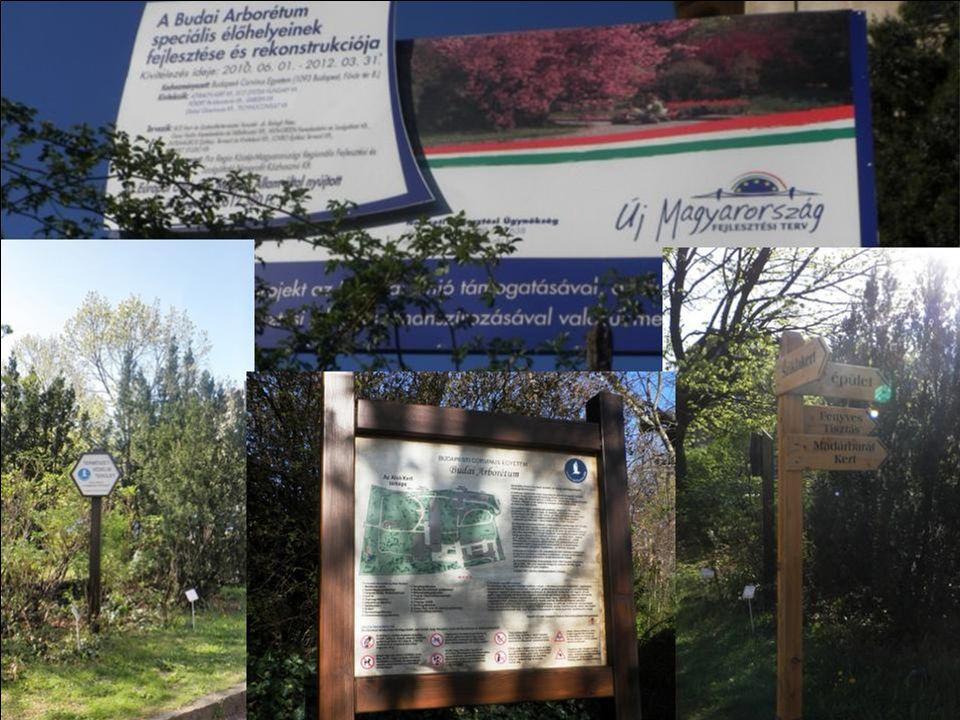 Budai Arborétum információk Fővárosunk budai oldalán a Gellért-hegytől délre terül el hazánk egyik legszínesebb gazdagságú arborétuma.