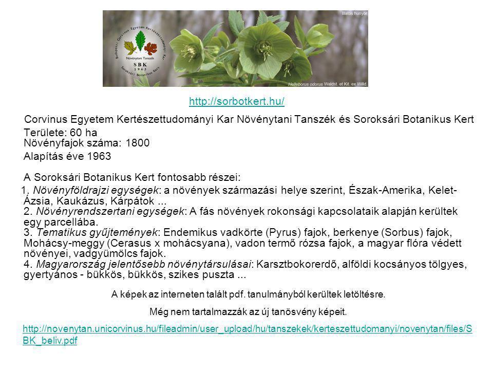 Corvinus Egyetem Kertészettudományi Kar Növénytani Tanszék és Soroksári Botanikus Kert Területe: 60 ha Növényfajok száma: 1800 Alapítás éve 1963 A Soroksári Botanikus Kert fontosabb részei: 1.