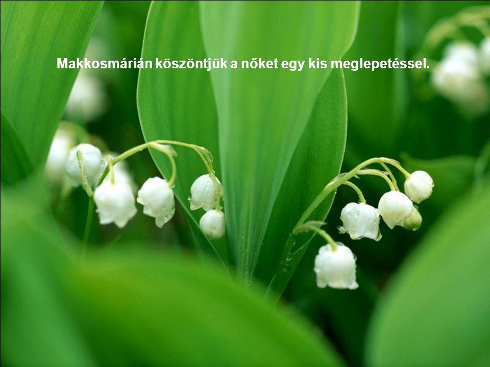 Útvonal: Normafa,-Csacsirét- Makkosmária A séta keretén belül ismerkedünk a tavaszi természettel.