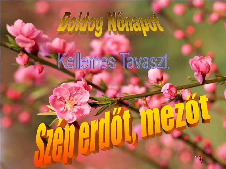 Bővebb információ található a www.btssz.hu honlapunkon Minden rendezvényünkre szeretettel várjuk.