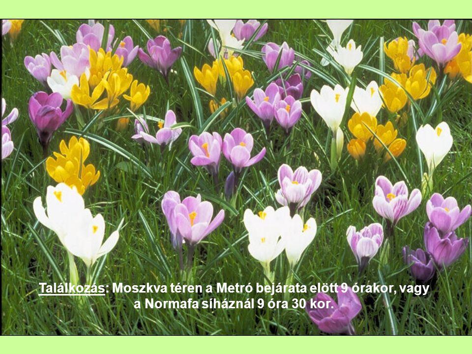 A Programsorozat nyitó túráját március 8-án a nők napján tartjuk egy tavaszt és nőket köszöntő séta keretén belül.