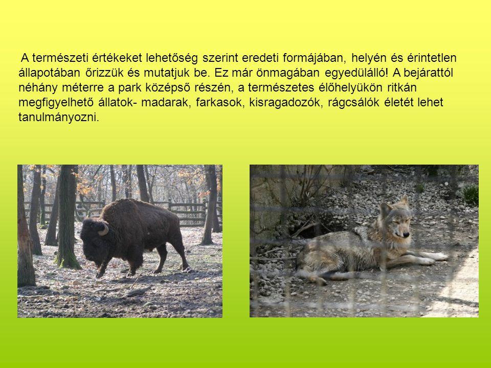 Cikta bárányok születtek Kihelyezve: 2008. február 24.