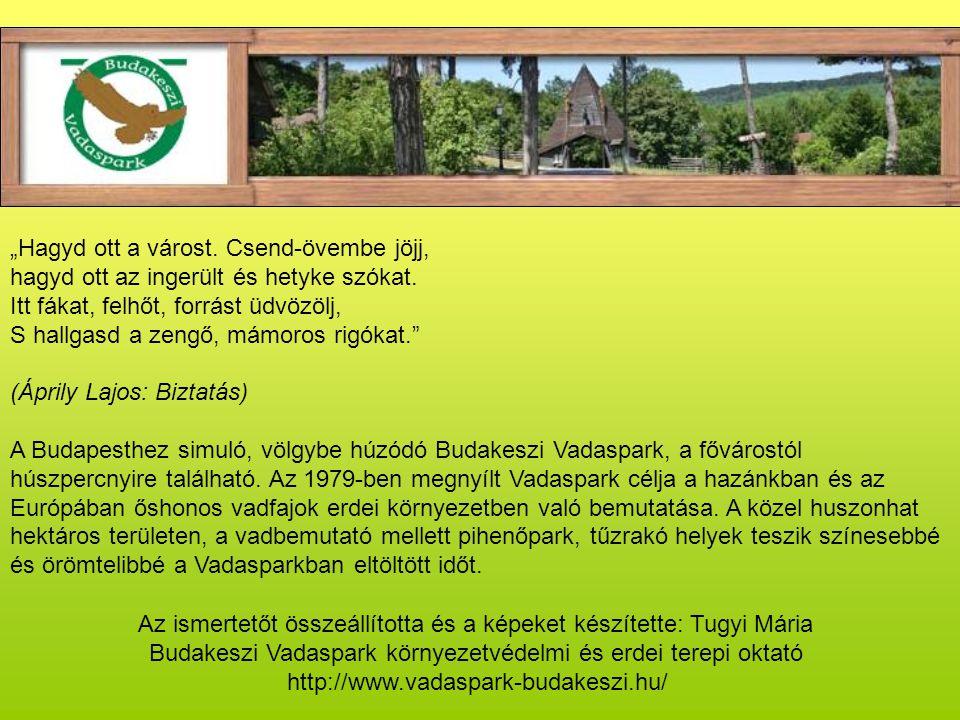 Vadmalacok születtek!.Kihelyezve: 2008. április 03.