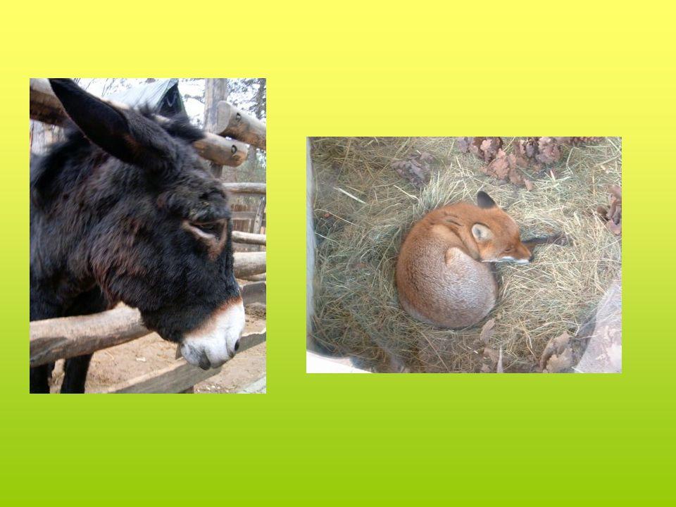 ·Az európai és a Kárpát- medencében élt vagy élő őshonos állatok bemutatóhelye egyedüli az országban az állatok természetes erdei körülmények között élnek