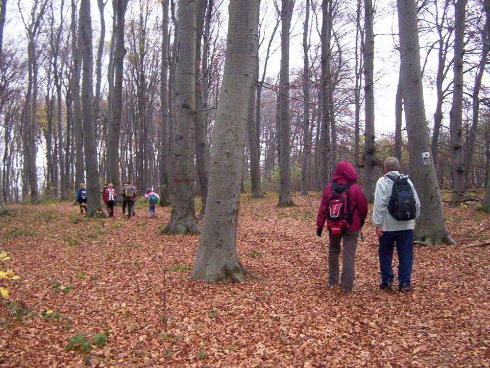 A BTSSZ Természetvédelmi és Természetismereti Bizottsága 2010 évi Kegyeleti Emléktúráját november 6-án, szombaton Makkosmáriához közel a Magaskői kőfejtőben lévő pihenőhelyen tartja.