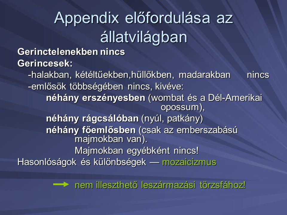 Appendix előfordulása az állatvilágban Gerinctelenekben nincs Gerincesek: -halakban, kétéltűekben,hüllőkben, madarakban nincs -emlősök többségében nin