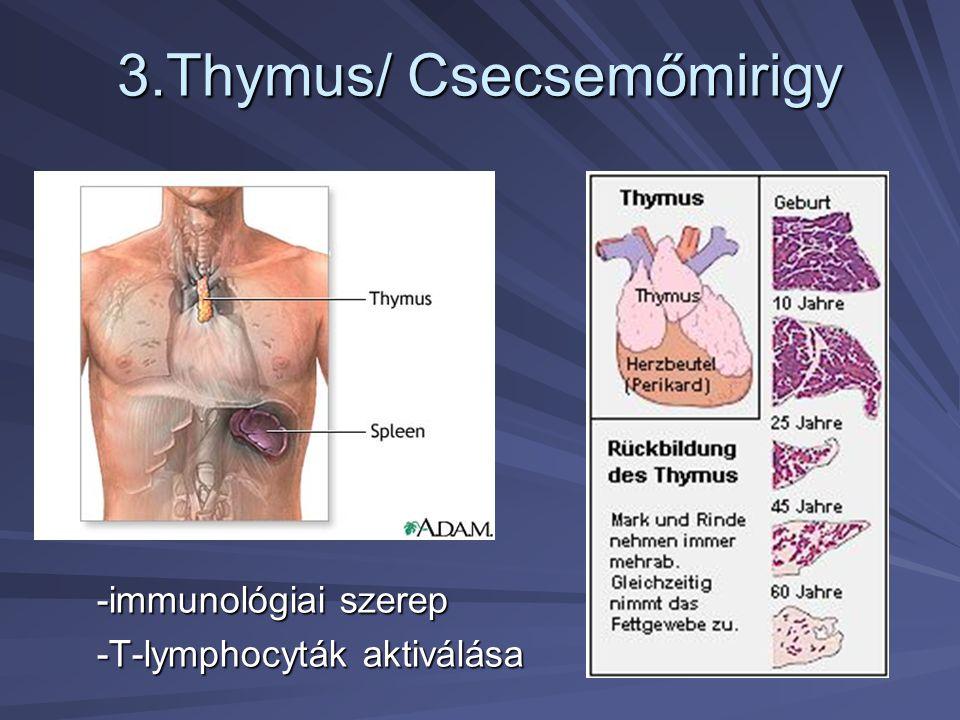3.Thymus/ Csecsemőmirigy -immunológiai szerep -T-lymphocyták aktiválása
