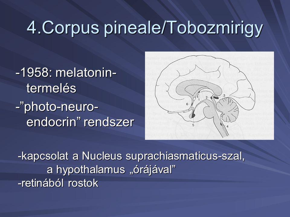 """4.Corpus pineale/Tobozmirigy -1958: melatonin- termelés -""""photo-neuro- endocrin"""" rendszer -kapcsolat a Nucleus suprachiasmaticus-szal, a hypothalamus"""