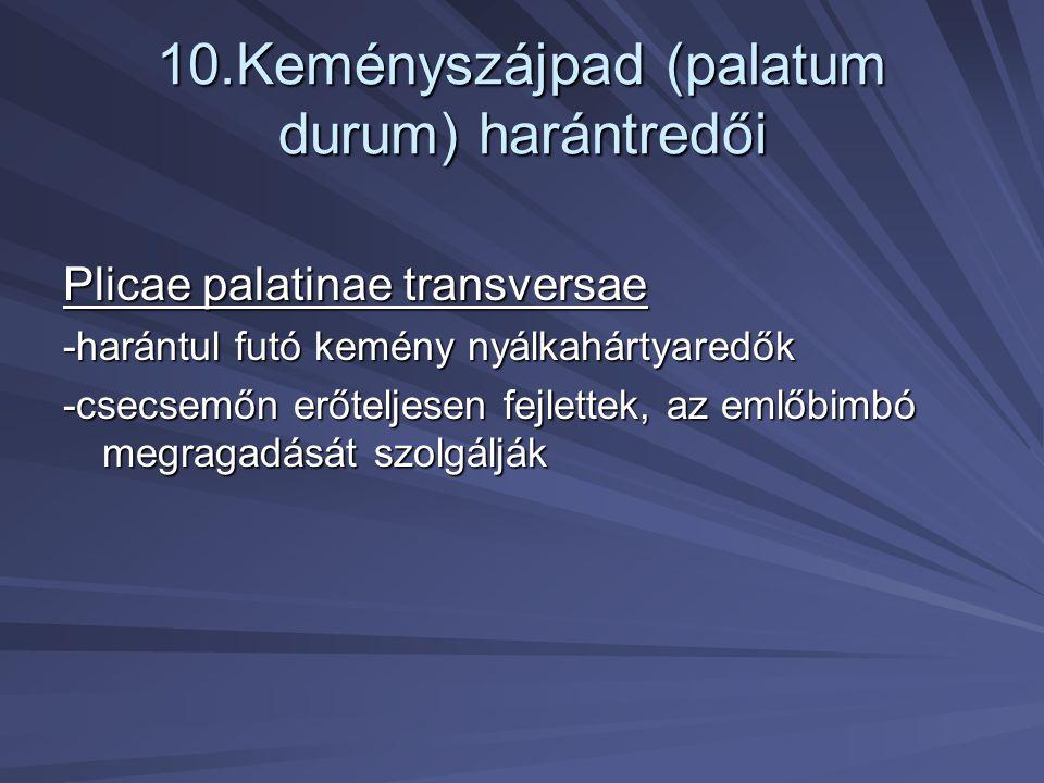10.Keményszájpad (palatum durum) harántredői Plicae palatinae transversae -harántul futó kemény nyálkahártyaredők -csecsemőn erőteljesen fejlettek, az