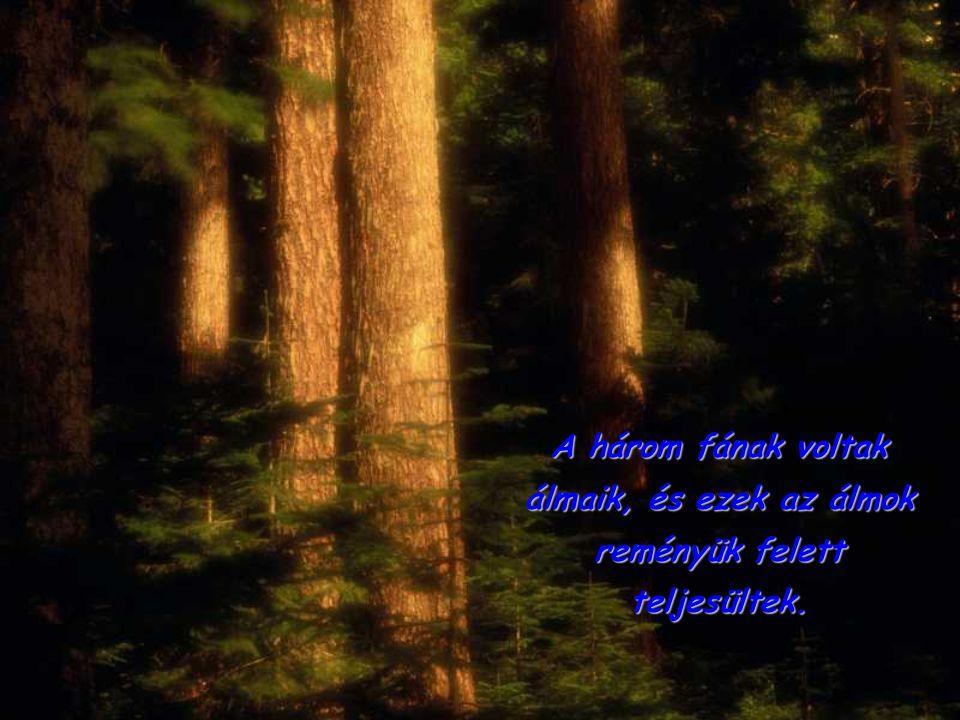 A három fának voltak álmaik, és ezek az álmok reményük felett teljesültek.