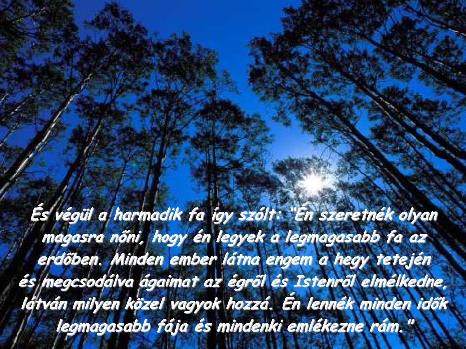 És végül a harmadik fa így szólt: Én szeretnék olyan magasra nőni, hogy én legyek a legmagasabb fa az erdőben.