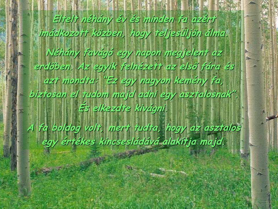 Eltelt néhány év és minden fa azért imádkozott közben, hogy teljesüljön álma.