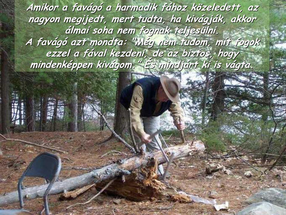 Amikor a favágó a harmadik fához közeledett, az nagyon megijedt, mert tudta, ha kivágják, akkor álmai soha nem fognak teljesülni.