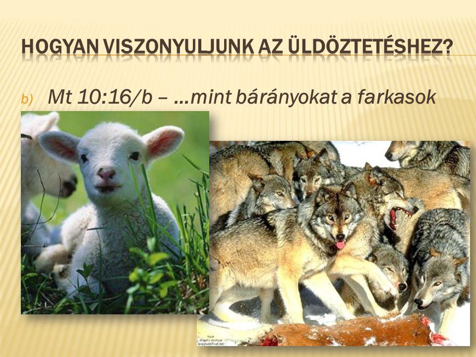 b) Mt 10:16/b – …mint bárányokat a farkasok közé