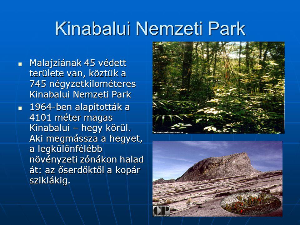 Kinabalui Nemzeti Park Malajziának 45 védett területe van, köztük a 745 négyzetkilométeres Kinabalui Nemzeti Park Malajziának 45 védett területe van, köztük a 745 négyzetkilométeres Kinabalui Nemzeti Park 1964-ben alapították a 4101 méter magas Kinabalui – hegy körül.